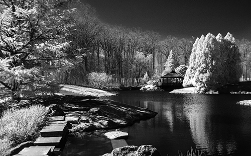 black and white image of forest and pond