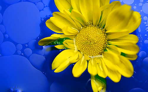 photo of bright yellow flower